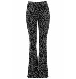 coolcat flared pants pip x cg